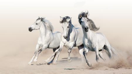 Drie witte paarden rennen in galop op woestijnstof Stockfoto