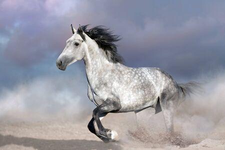 Horse free run on desert dust  Stock fotó