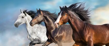 Horse portrait with long mane close up in motion 写真素材