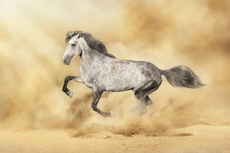 Grey horse with long mane run in desert storm Reklamní fotografie