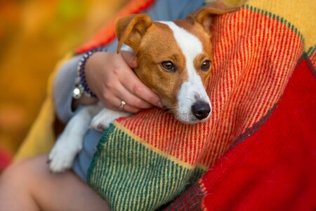 Jack russell with girl on plaid against red autumn park