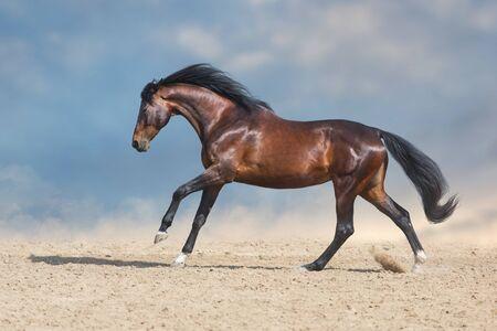 Bay horse  run fast in desert dust against blue background Stock fotó