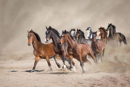 Pferdeherde läuft frei auf Wüstenstaub gegen Sturmhimmel