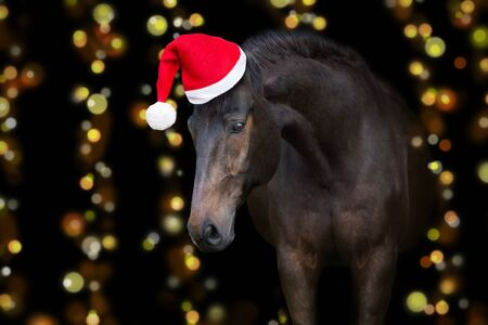 Horse portrait in santa red hat against christmas lights