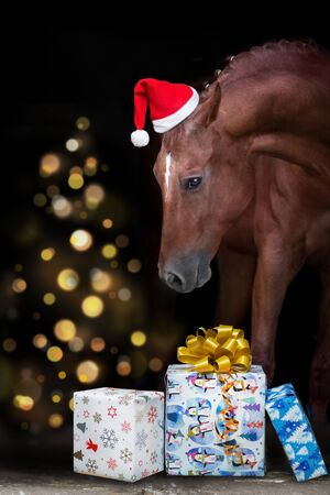 Horse portrait in santa red hat against christmas lights and gifts Zdjęcie Seryjne