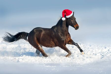 Horse run gallop  in santa red hat in snow day