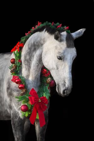 White horse in christmas wreath. New Year and Christmas horse