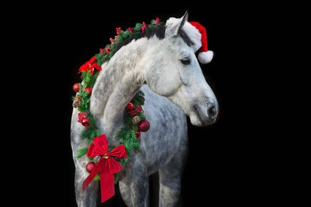 White horse in christmas wreath and red santa hat. New Year and Christmas horse Zdjęcie Seryjne