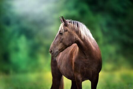 Horse with blond mane close up portrait