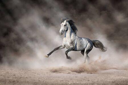 White Horse free run on desert dust