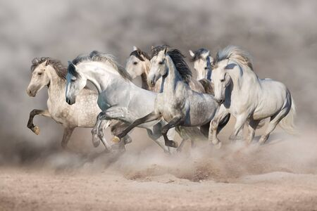 White horses free run in desert Фото со стока