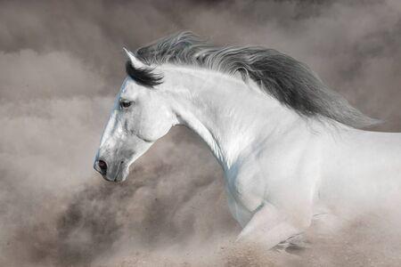 Grey horse run gallop in desert sand