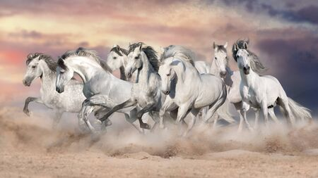 White horses free run in desert against beautiful sky Фото со стока