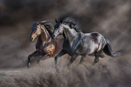 Two horse run gallop in desert storm