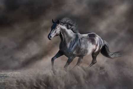 Black stallion free run in dark desert dust