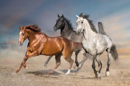 Horse herd run free on desert dust against storm sky