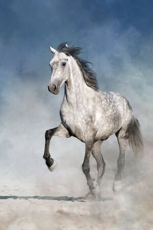 White horse play fun in sandy field  Фото со стока