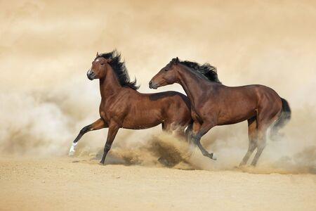 Two horse play with dog in sandy dust Archivio Fotografico