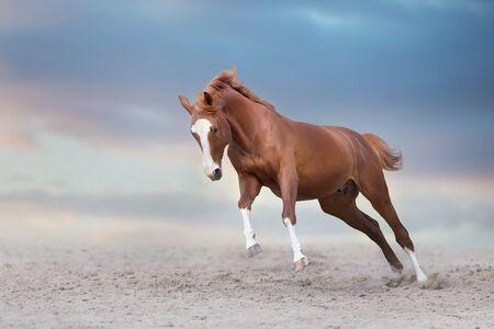 Beautiful red horse running on desert storm
