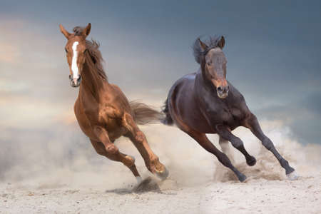 Two beautiful horse run free in desert Stock Photo