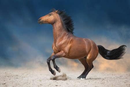 Bay stallion run in desert sand