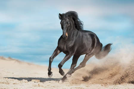 Bay horse run free gallop isolated on white Imagens