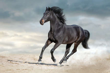 Bay horse run free gallop isolated on white Reklamní fotografie