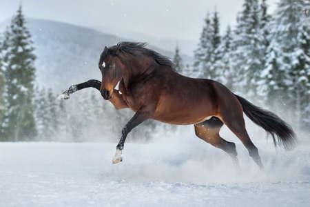 Horses free run on desert storm against sunset sky