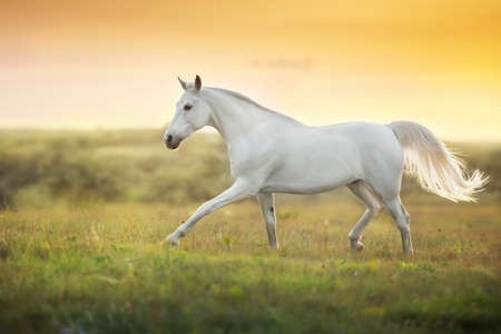 White horse in motion with sky behind