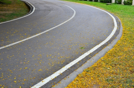 Curved road in park photo