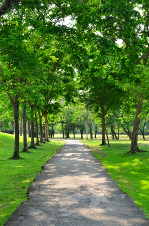 road in the middle of beautiful trees Stock Photo