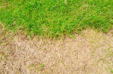 green and dry grass