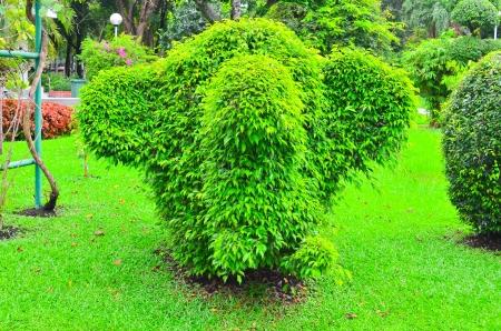 Elephant Tree photo