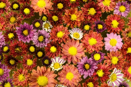 colorful flowers as background