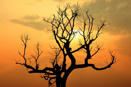 silhouette of tree branches at sunset