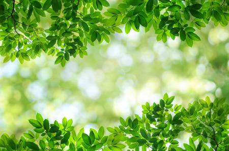 自然の緑の葉の背景のボケ味を持つ 写真素材