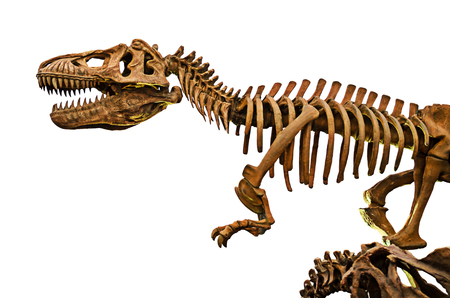 huge: huge dinosaurs skeleton