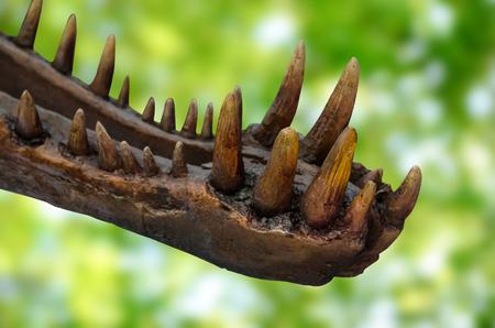 dinosaur teeth: Dinosaur teeth on green background Stock Photo