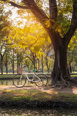 green park: white bicycle in green park