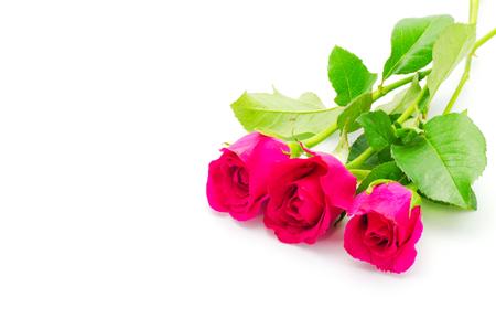 beautiful rose on white background 免版税图像