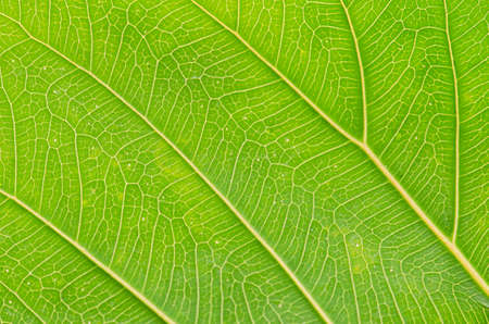 abstract texture of green leaves for background
