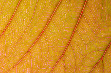 abstract texture of brown leaves for background