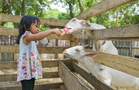 Cute Asian girl bottle-feed goat Foto de archivo