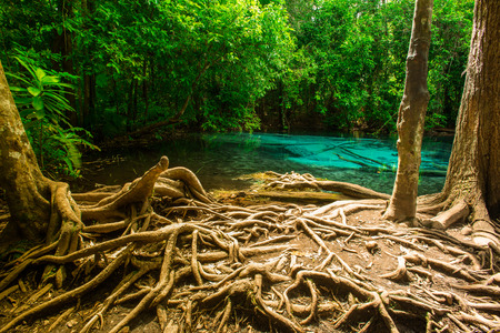Emerald pool is unseen place in Thailand photo