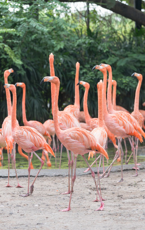 Colorful of Pink flamingos photo