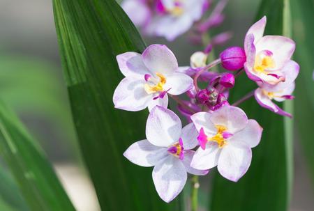 purple ground orchid photo