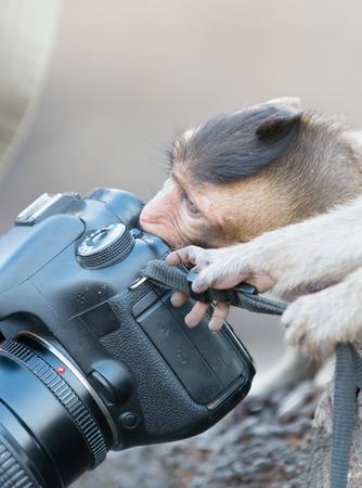 bite: cute monkey bite camera Stock Photo