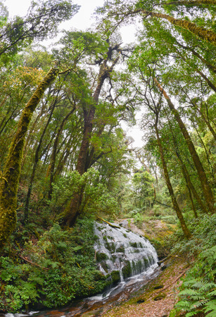picknic: Kew Mae Pan, Waterfall in hill evergreen forest of Doi Inthanon, Chiang Mai, Thailand
