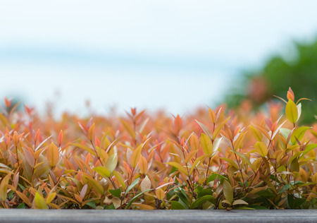 christina: Christina leaves on nature background Stock Photo