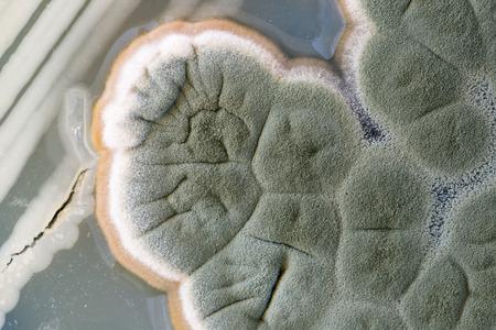 fungi: macro of green fungi